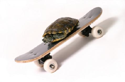 turtle-on-a-skateboard1.jpg