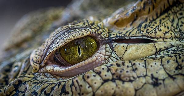 crocodile-3203505_1920.jpg