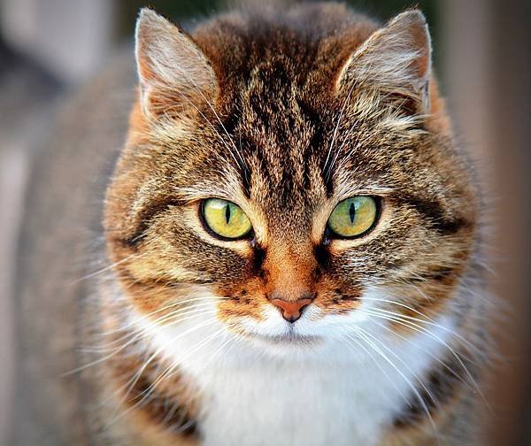 cat-300572_1920.jpg