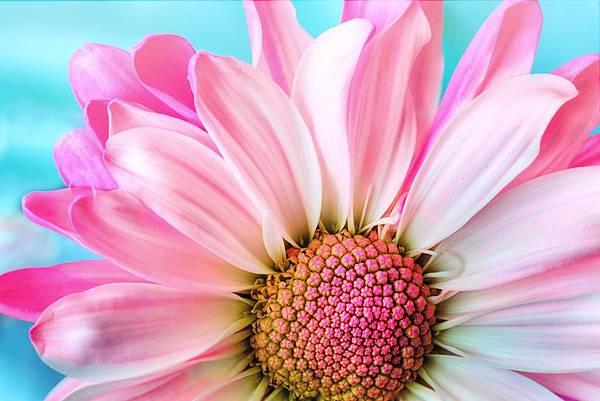 7. flower.jpg