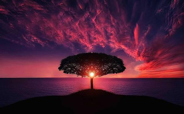 9. tree.jpg