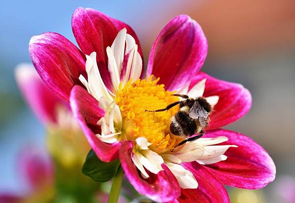 11. flower.jpg