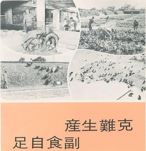畫刊148養豬種菜副食生產伙食.jpg