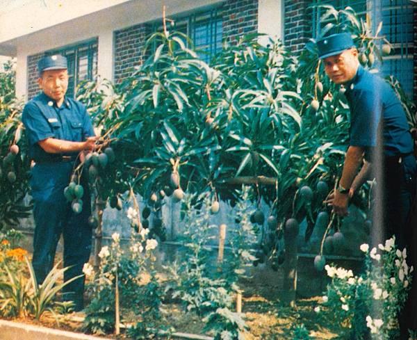 警備通訊251期民6805-橋隧連麻善大橋班哨副食生產種水果.jpg