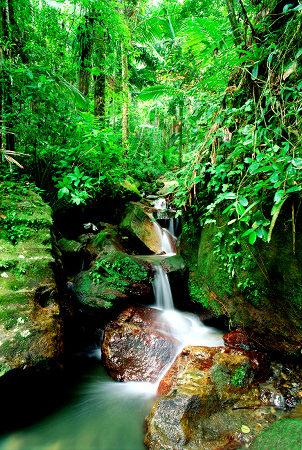 艾爾雲克國家森林公園(波多黎各).jpg
