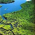 亞馬遜熱帶雨林.jpg