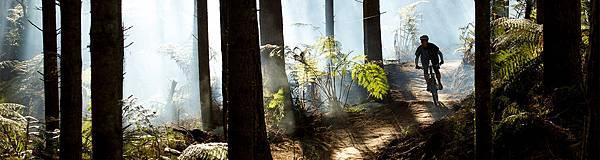 redwoods_bike_04