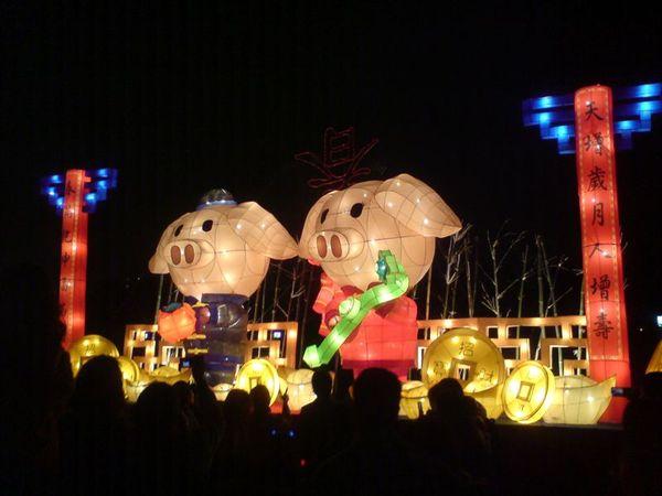 兩隻胖豬.JPG