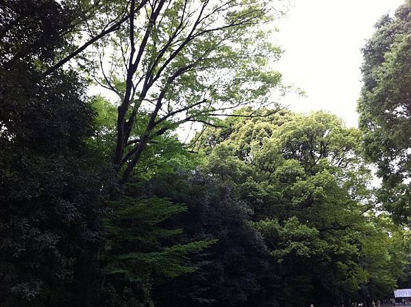 日本遊 (24).jpg