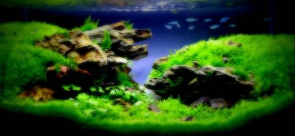 20140401 45cm 成景圖(1)1.jpg