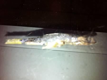 die fish 2.jpg