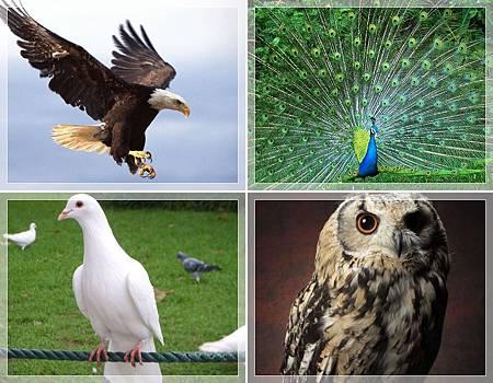 DISC專欄:從說話態度看你是哪種鳥