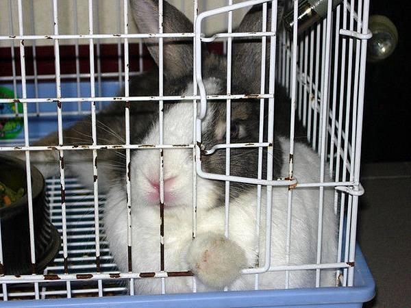 沒看過兔子貴妃躺嗎?