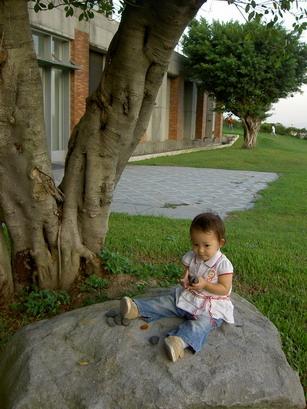 樹下玩石頭