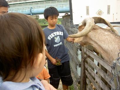 大哥哥在餵羊耶