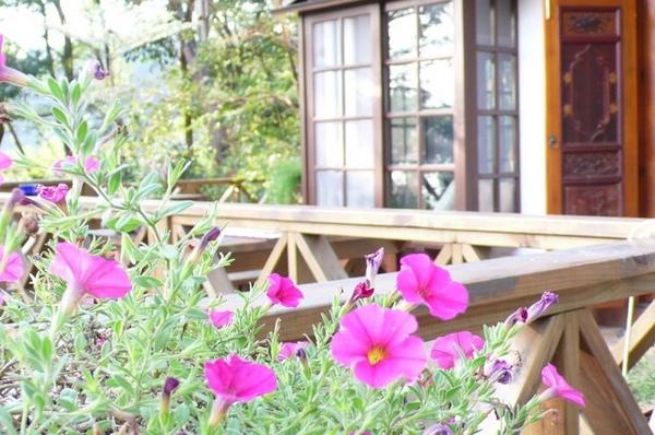 屋外小花朵.JPG