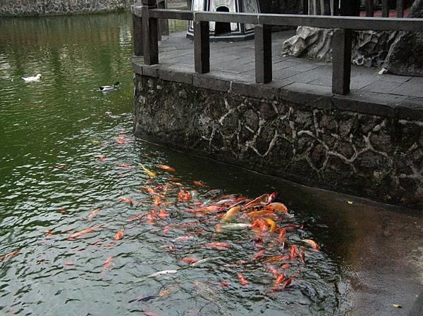 魚歌互答......」