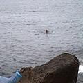 海面上有一個人在游泳喔