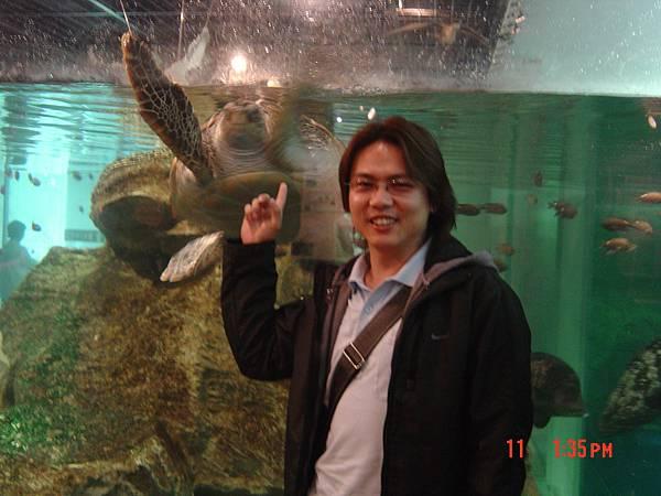 99島水族館-大海龜one more
