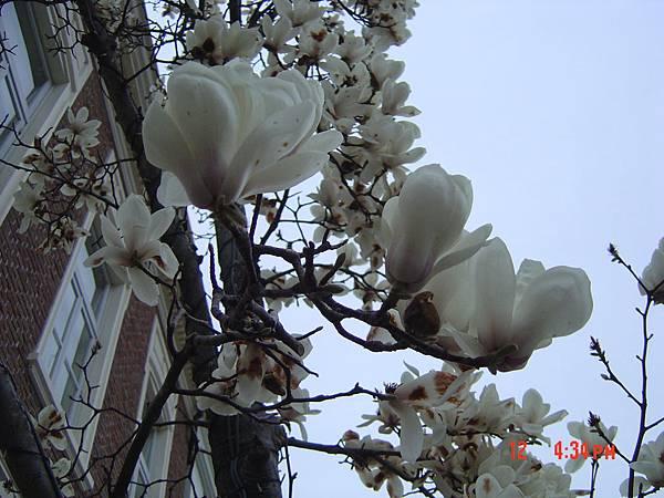豪斯登堡-不知名樹