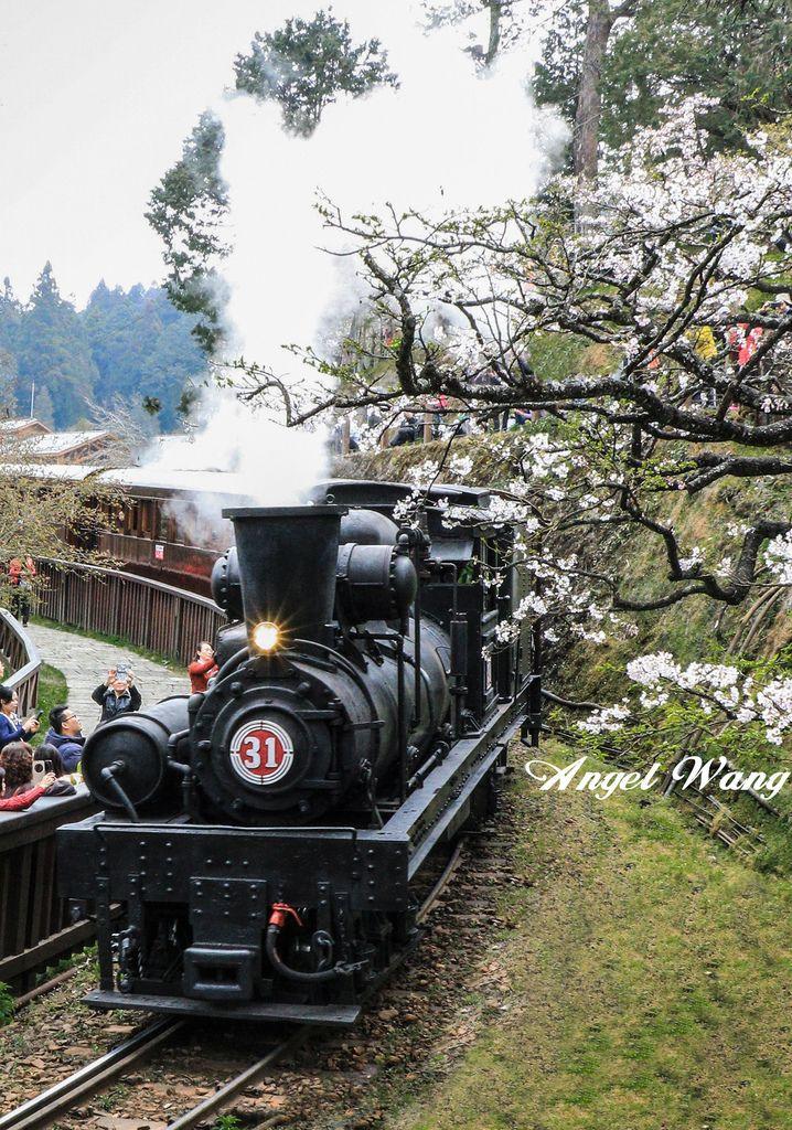 阿里山蒸汽火車 (2).jpg