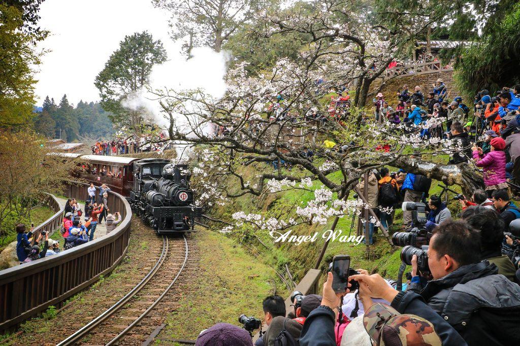 阿里山蒸汽火車.jpg