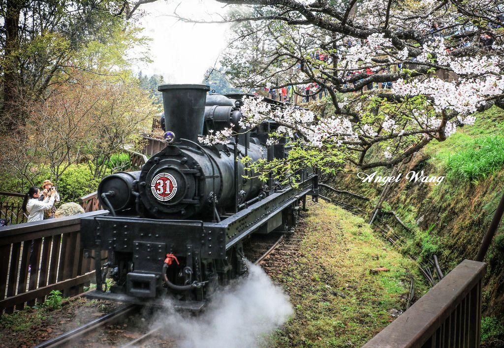 阿里山蒸汽火車3.jpg