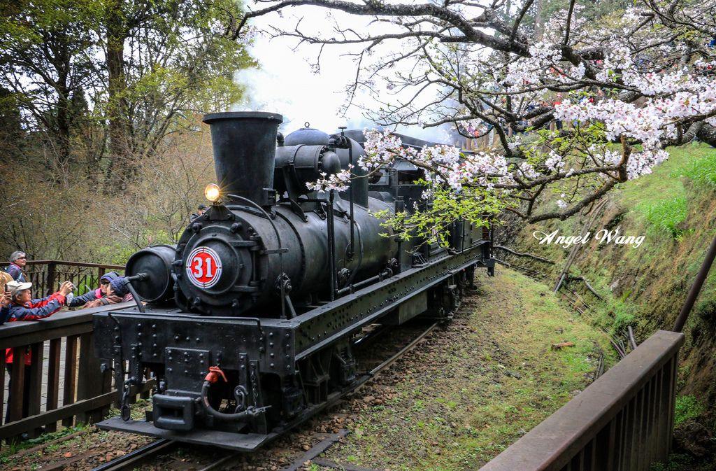 阿里山蒸汽火車4.jpg
