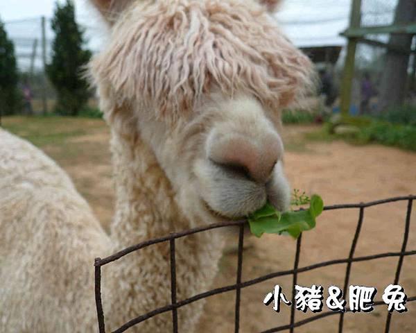 台中市【天馬農場】23