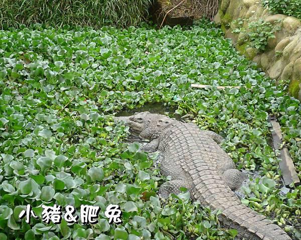 台中市【天馬農場】35