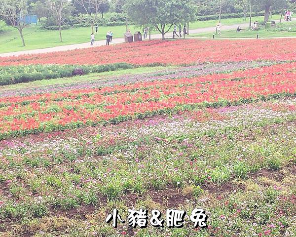 桃園縣.大溪鎮【花海農場】02