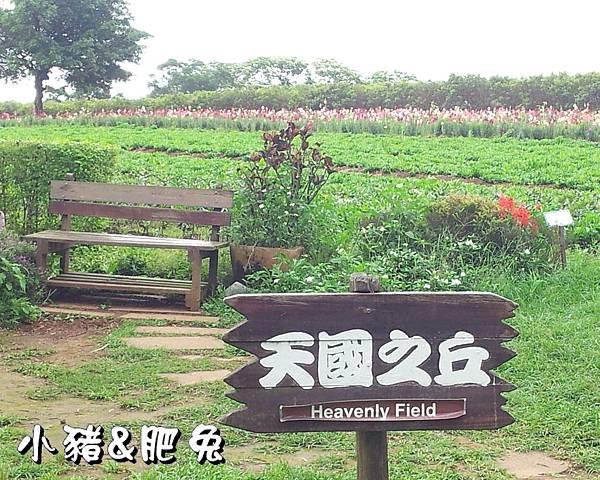 桃園縣.大溪鎮【花海農場】10