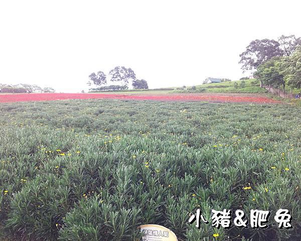 桃園縣.大溪鎮【花海農場】12
