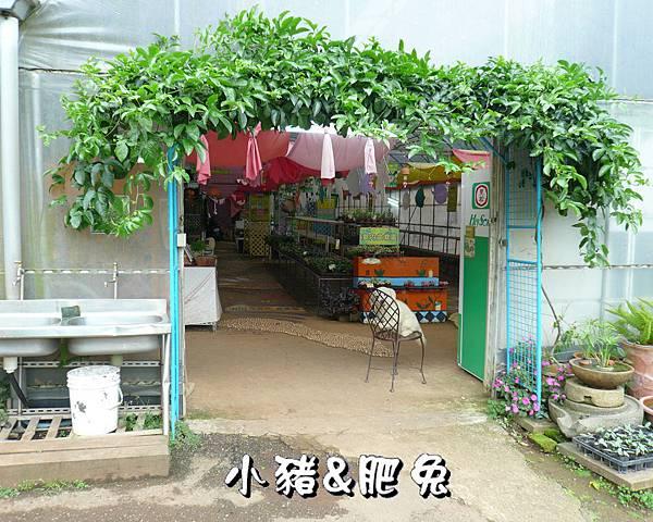 桃園縣.大溪鎮【花海農場】34