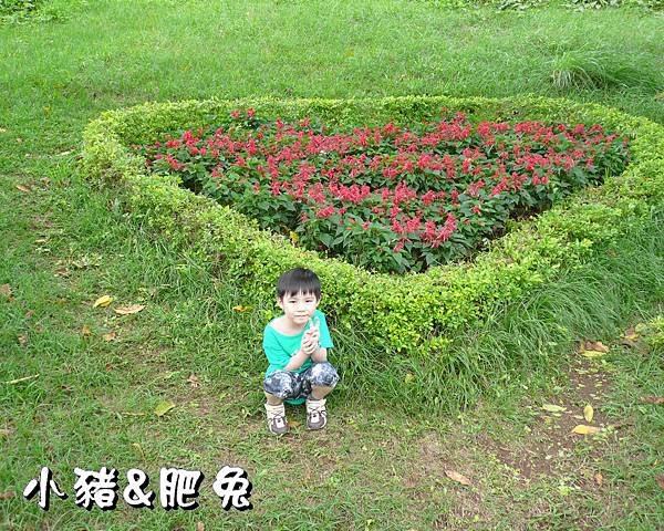 桃園縣.大溪鎮【花海農場】37