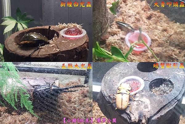 台北市華山文化創意產業園區【昆蟲展】09