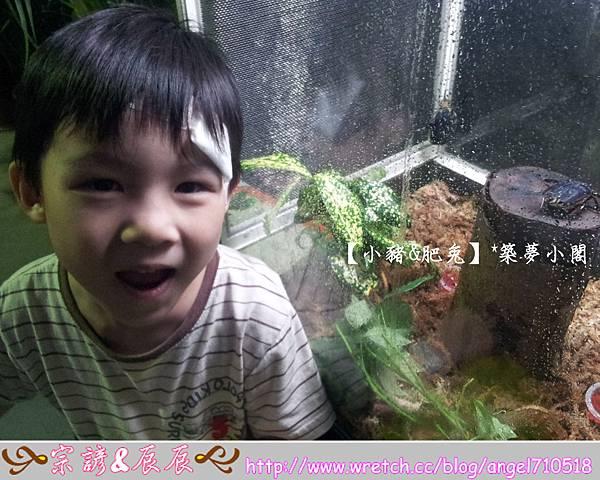 台北市華山文化創意產業園區【昆蟲展】10