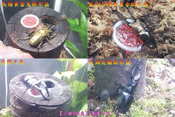 台北市華山文化創意產業園區【昆蟲展】13
