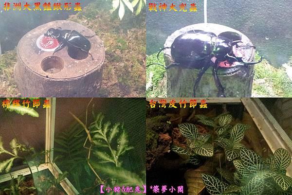 台北市華山文化創意產業園區【昆蟲展】14