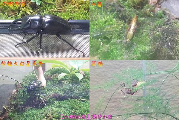 台北市華山文化創意產業園區【昆蟲展】15