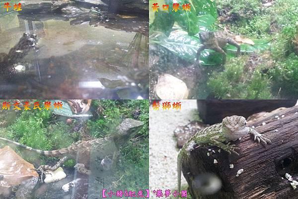 台北市華山文化創意產業園區【昆蟲展】16
