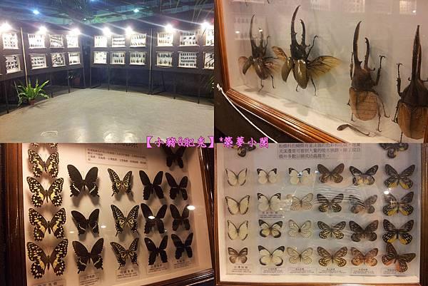 台北市華山文化創意產業園區【昆蟲展】17