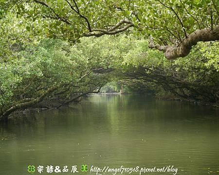 台南市.安南區【四草綠色隧道】08.jpg