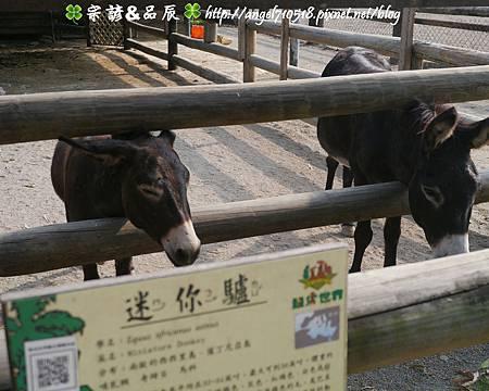 臺南市.學甲區【頑皮世界野生動物園】21.jpg