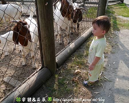 臺南市.學甲區【頑皮世界野生動物園】22.jpg