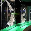 國立自然科學博物館【台中市.北區】15.jpg