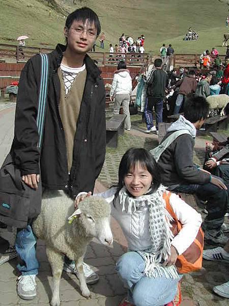 虐待羊=   =