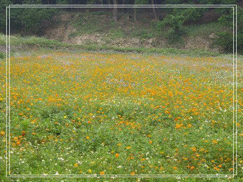 32路旁的小黃花.JPG