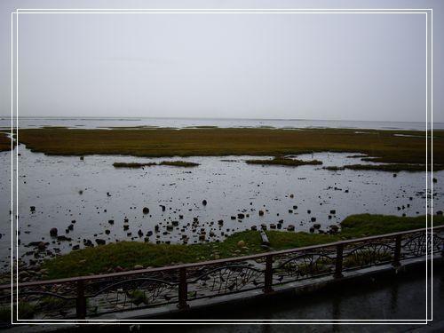 29濕地景觀.JPG