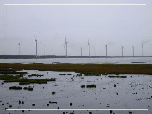 31濕地景觀.JPG